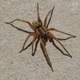 Уничтожение пауков в Альметьевске